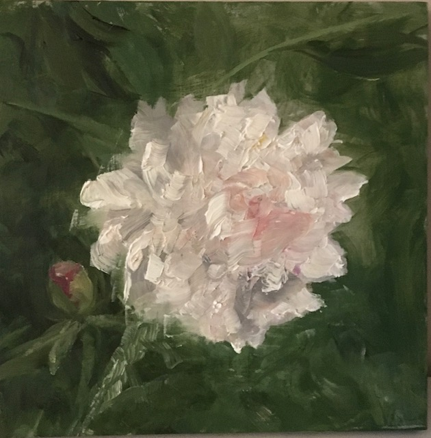 145 - Peony - 8 x8 - Landscape - $75